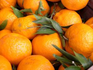 I Mandarini o Citrus Reticulata Blanco - Nutrizionista Bologna