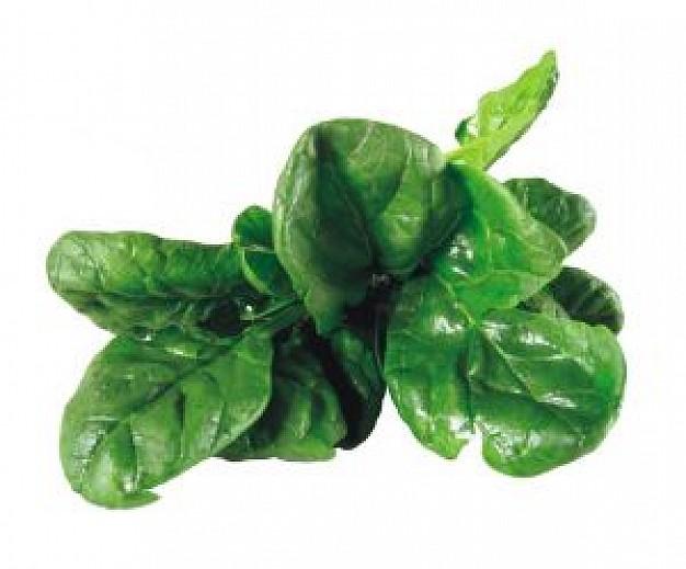 Gli Spinaci o Spinacia oleracea L. - Nutrizionista Bologna