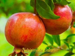 Melograno - Nutrizionista Bologna Serena Tassinari