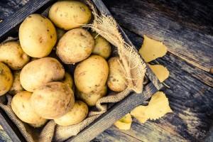 nutrizionosta bologna patata